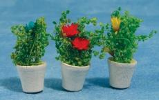 Blumentöpfe Pottted Flowers