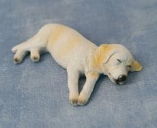 Ben the sleepy Labrador