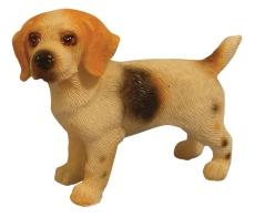 stehender Beagle Standing Beagle
