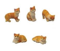 5 Katzen Ingwer/Weiß Ginger/White Cats