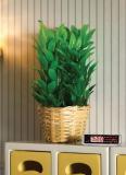 Buschige Pflanze im Korb Bushy Plant in Basket