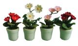 Blumentöpfe Flowers in Pots