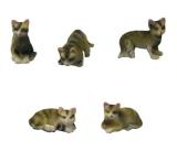 5 Tabby Cats